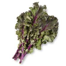 Organic Kale Red