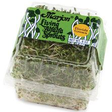 Living Alfalfa Sprouts