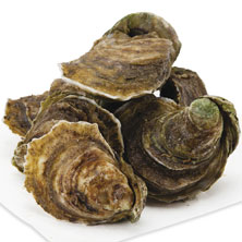 Oysters Live, Wild or Farmed